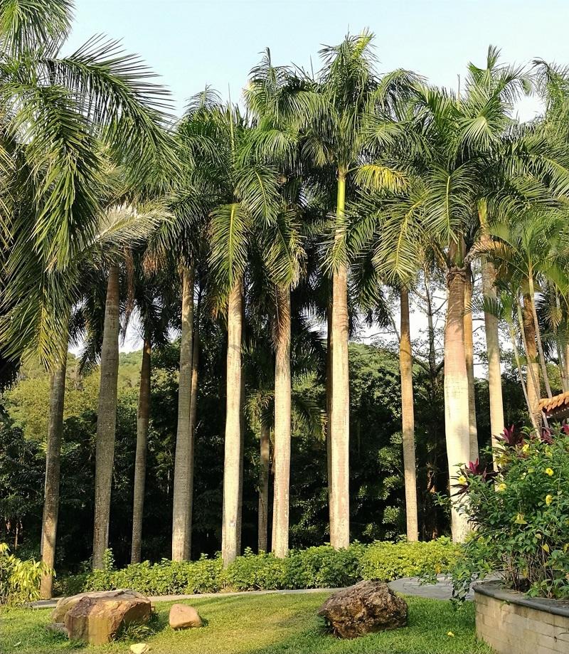 13-2棕榈园.jpg