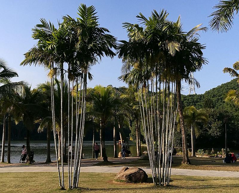 13-3棕榈园.jpg