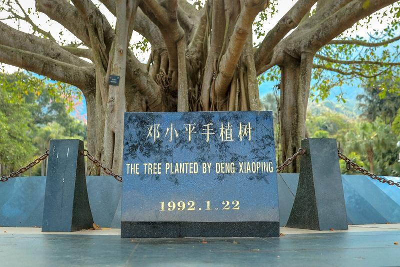 1-1手植树.JPG